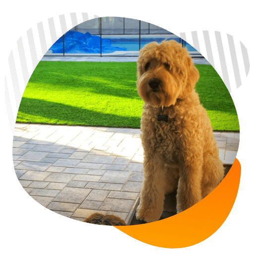 Residential K9 pet turf installation