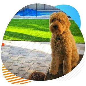k9 pet turf artificial grass installation